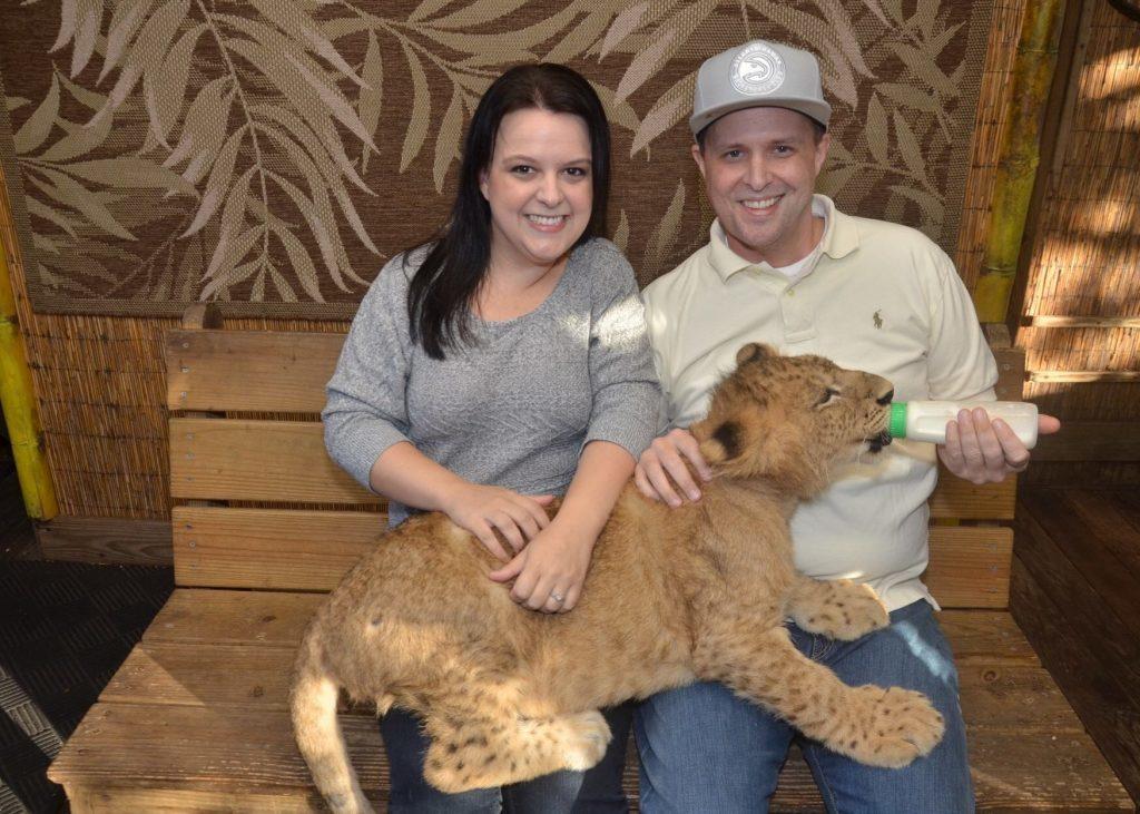 baby liger at Preservation Station