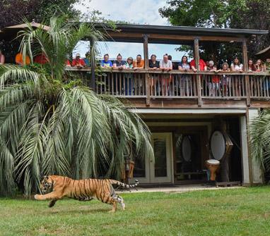 tiger inside house movie